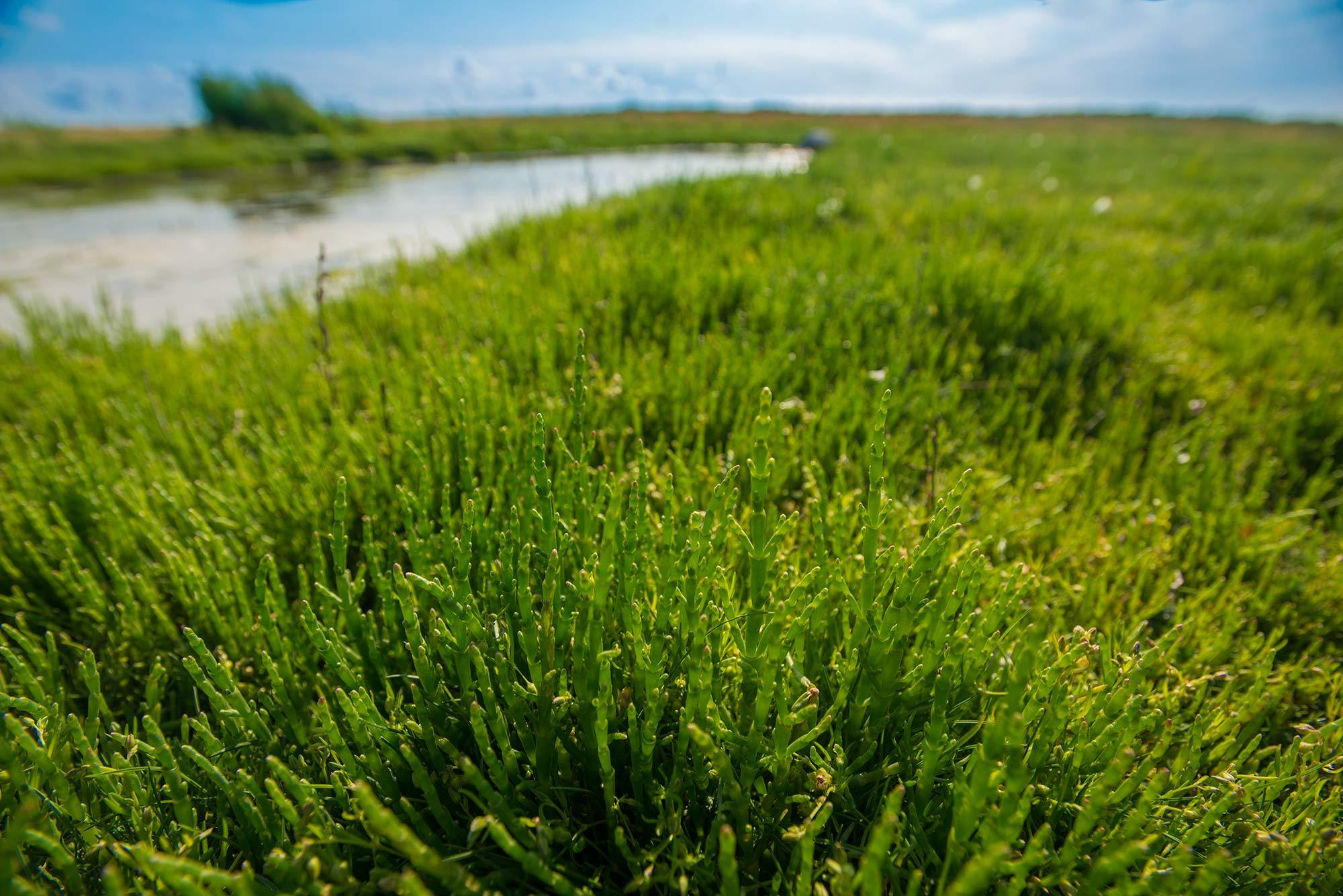 krestenhillerup.dk`s foto af salturt