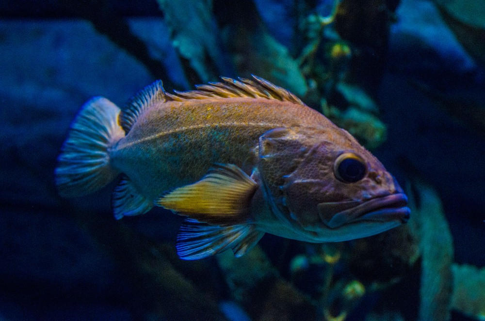 krestenhillerup.dk`s foto af Rødfisk / Redfish