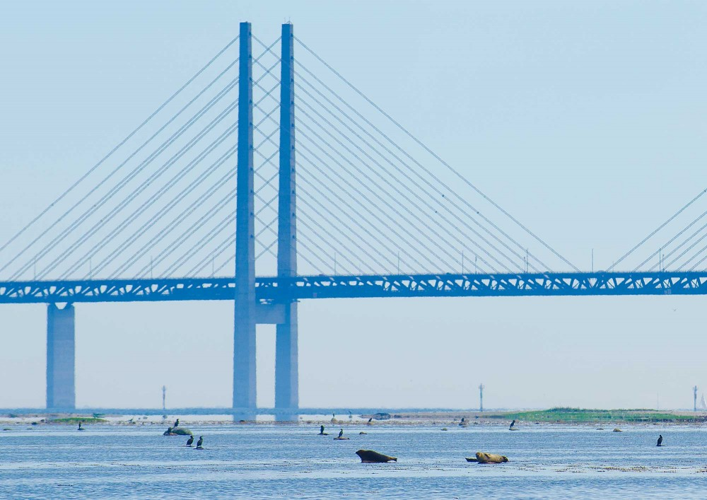Oresund bridge with seals, sun and water in the background