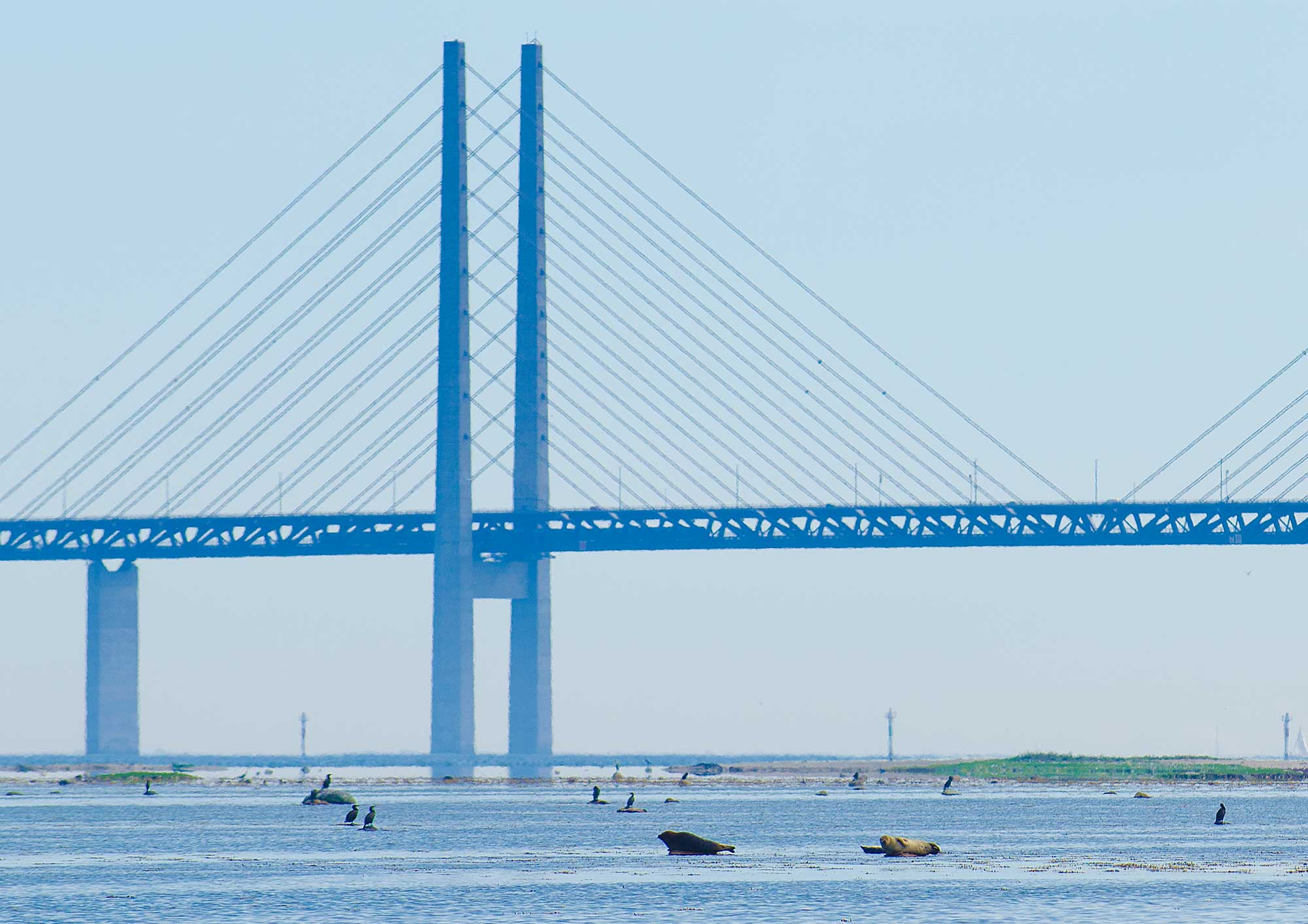Oresund bridge - seals, sun and water