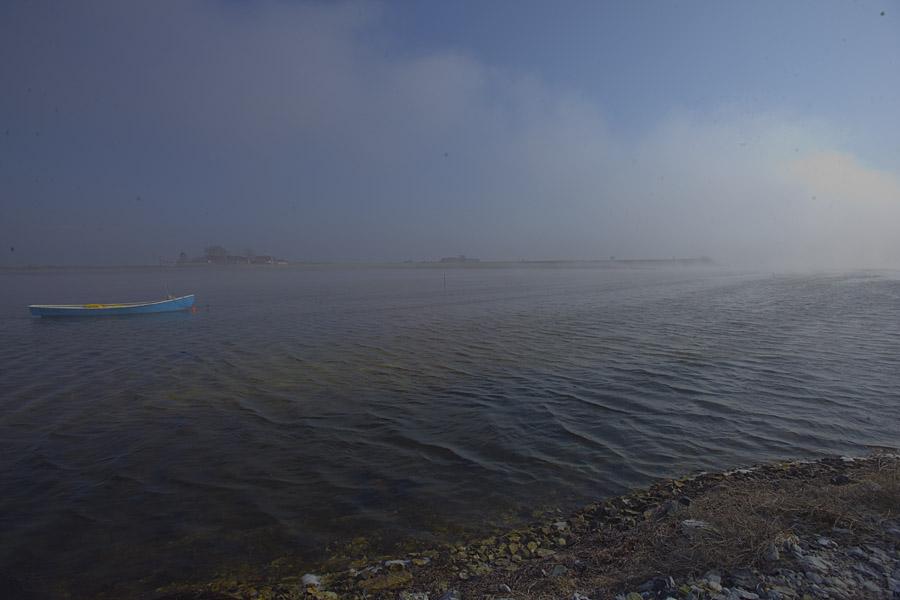 Havgus på saltholm, set fra havnen